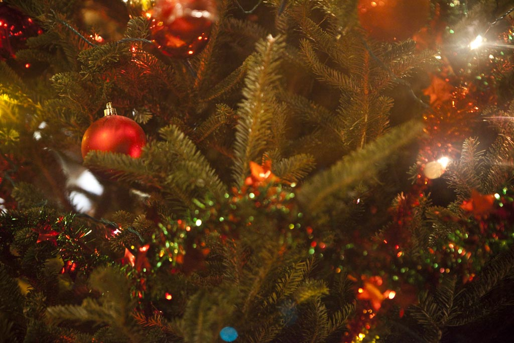 - How To Recycle Your Live Christmas Tree In Philadelphia