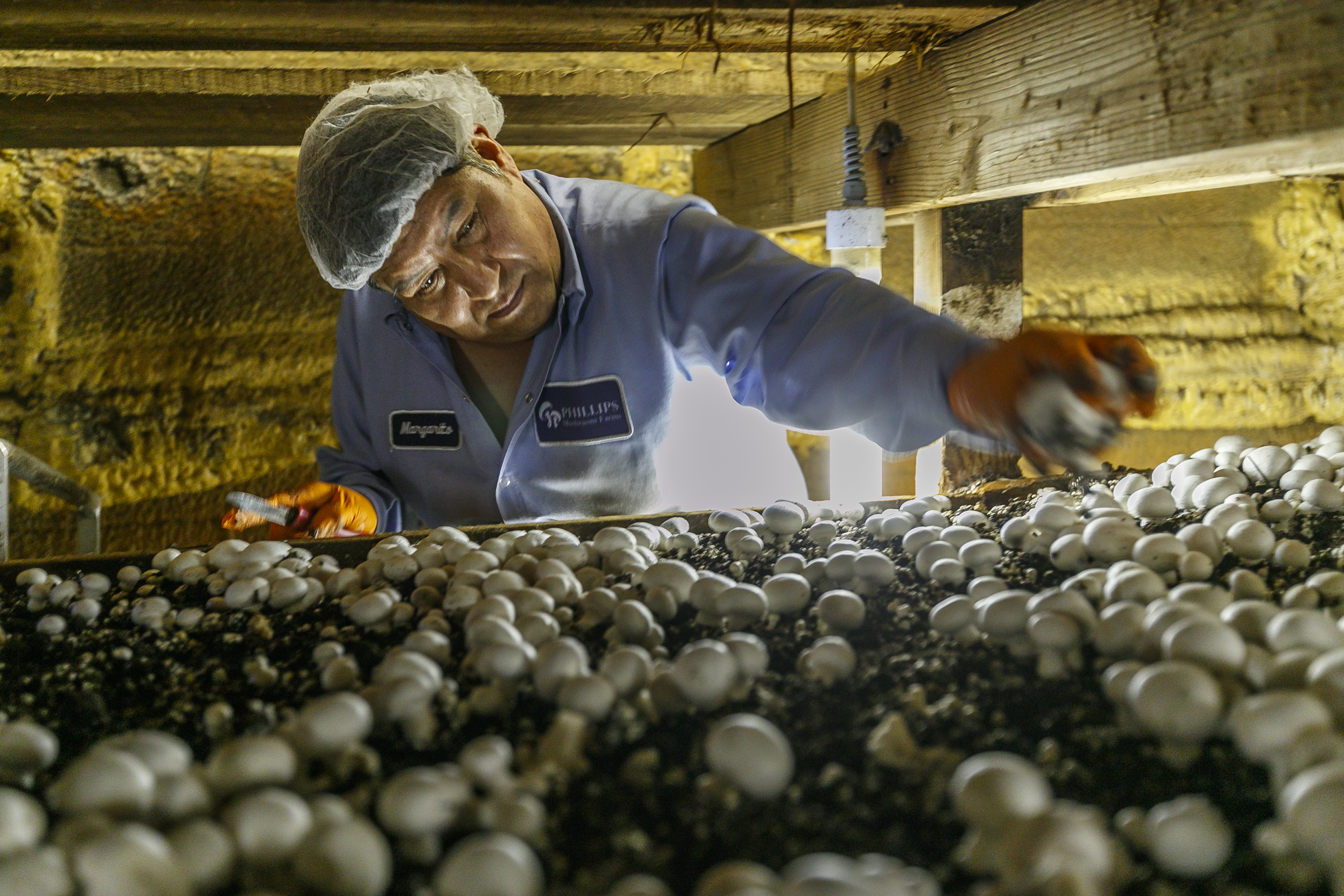 Kennett Square Mushroom Grower S 115 Million Expansion Is A Big Bet For New York Investor